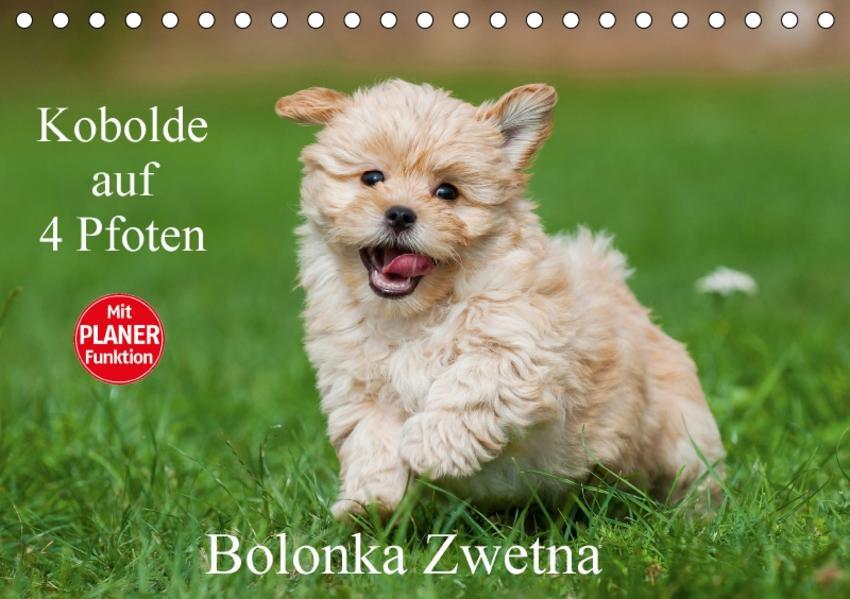 Kobolde auf 4 Pfoten - Bolonka Zwetna (Tischkalender 2017 DIN A5 quer) - Coverbild
