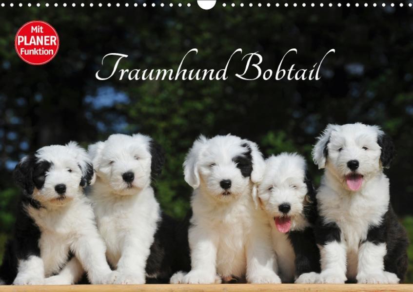 Traumhund Bobtail (Wandkalender 2017 DIN A3 quer) - Coverbild