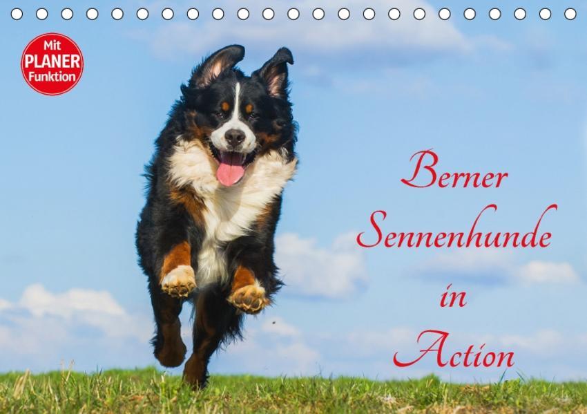 Berner Sennenhunde in Action (Tischkalender 2017 DIN A5 quer) - Coverbild