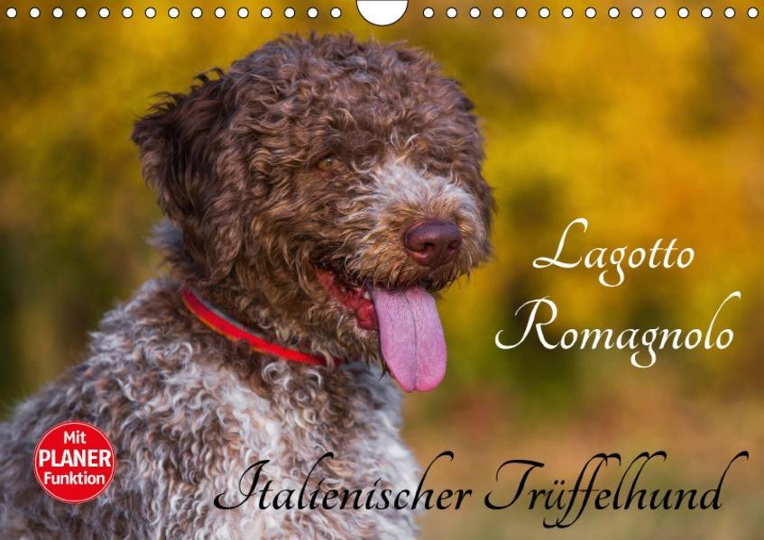 Lagotto Romagnolo - Italienischer Trüffelhund (Wandkalender 2017 DIN A4 quer) - Coverbild