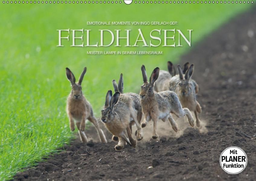 Emotionale Momente: Feldhasen (Wandkalender 2017 DIN A2 quer) - Coverbild