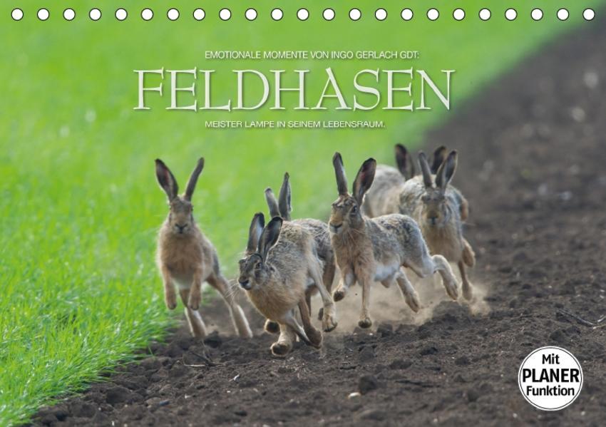 Emotionale Momente: Feldhasen (Tischkalender 2017 DIN A5 quer) - Coverbild