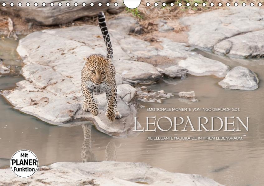Emotionale Momente: Leoparden (Wandkalender 2017 DIN A4 quer) - Coverbild
