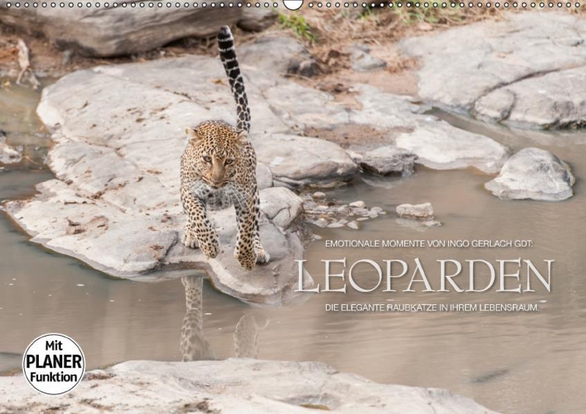 Emotionale Momente: Leoparden (Wandkalender 2017 DIN A2 quer) - Coverbild