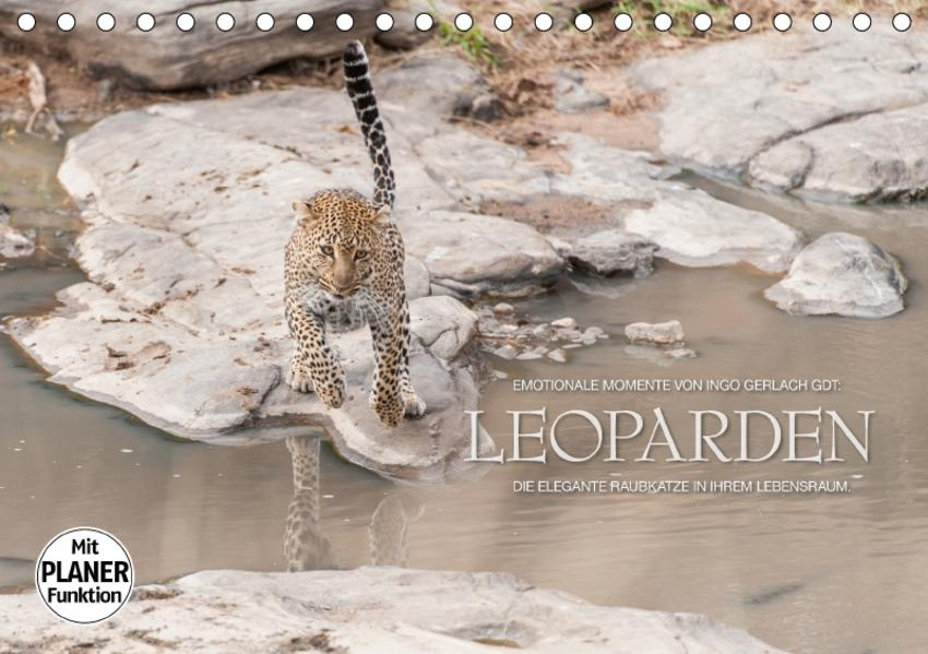 Emotionale Momente: Leoparden (Tischkalender 2017 DIN A5 quer) - Coverbild