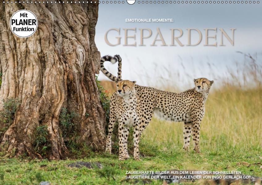Emotionale Momente: Geparden (Wandkalender 2017 DIN A2 quer) - Coverbild