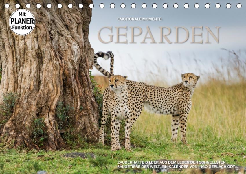 Emotionale Momente: Geparden (Tischkalender 2017 DIN A5 quer) - Coverbild