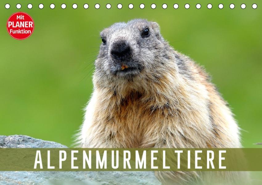 Alpenmurmeltiere (Tischkalender 2017 DIN A5 quer) - Coverbild