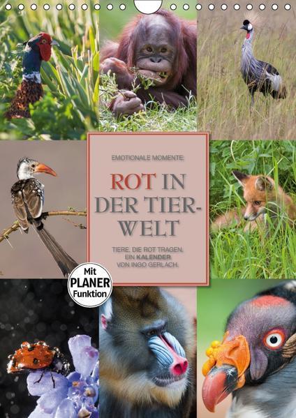 Emotionale Momente: Rot in der Tierwelt (Wandkalender 2017 DIN A4 hoch) - Coverbild