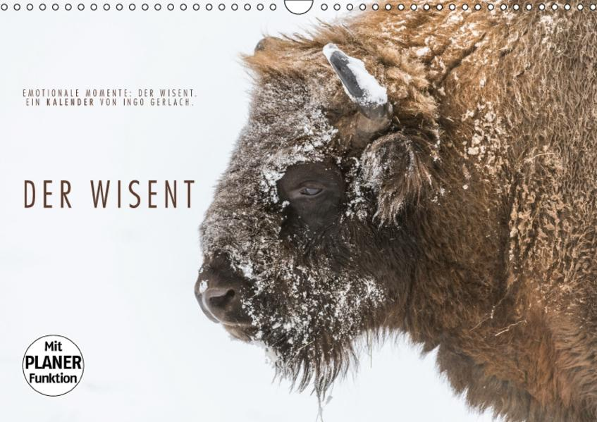 Emotionale Momente: Der Wisent. (Wandkalender 2017 DIN A3 quer) - Coverbild