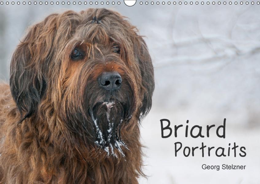 Briard Portraits (Wandkalender 2017 DIN A3 quer) - Coverbild