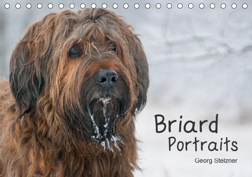 Briard Portraits (Tischkalender 2017 DIN A5 quer) - Coverbild