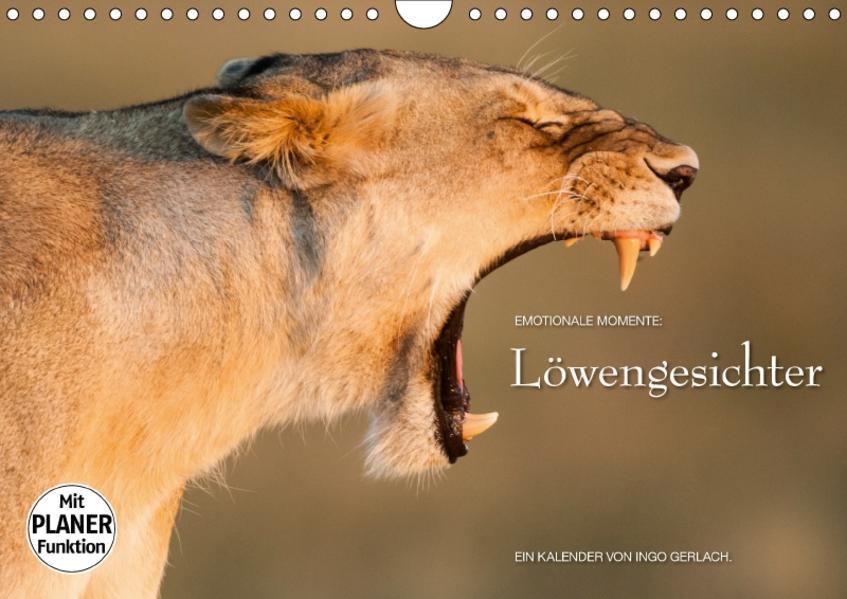 Emotionale Momente: Löwengesichter (Wandkalender 2017 DIN A4 quer) - Coverbild