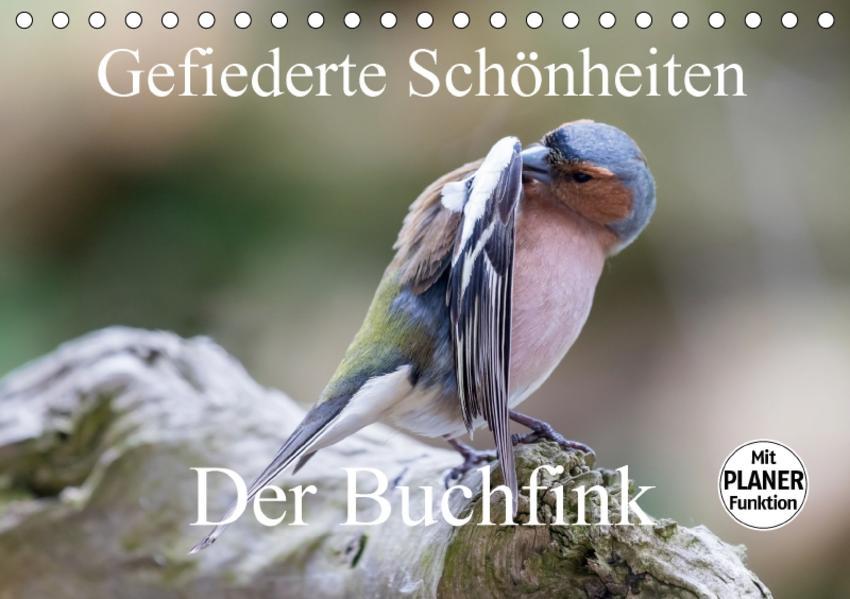 Gefiederte Schönheiten - Der Buchfink (Tischkalender 2017 DIN A5 quer) - Coverbild