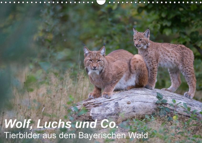 Wolf, Luchs und Co. - Tierbilder aus dem Bayerischen Wald (Wandkalender 2017 DIN A3 quer) - Coverbild