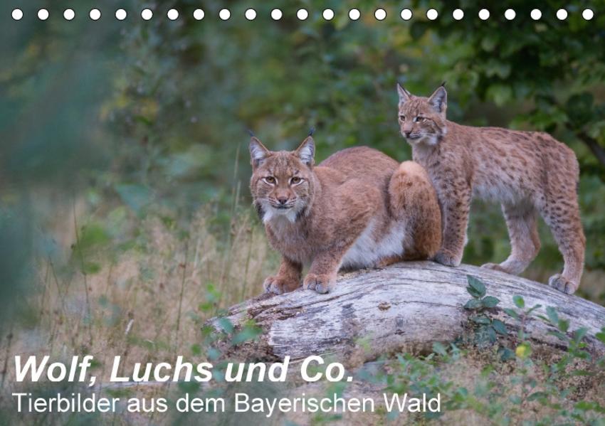 Wolf, Luchs und Co. - Tierbilder aus dem Bayerischen Wald (Tischkalender 2017 DIN A5 quer) - Coverbild