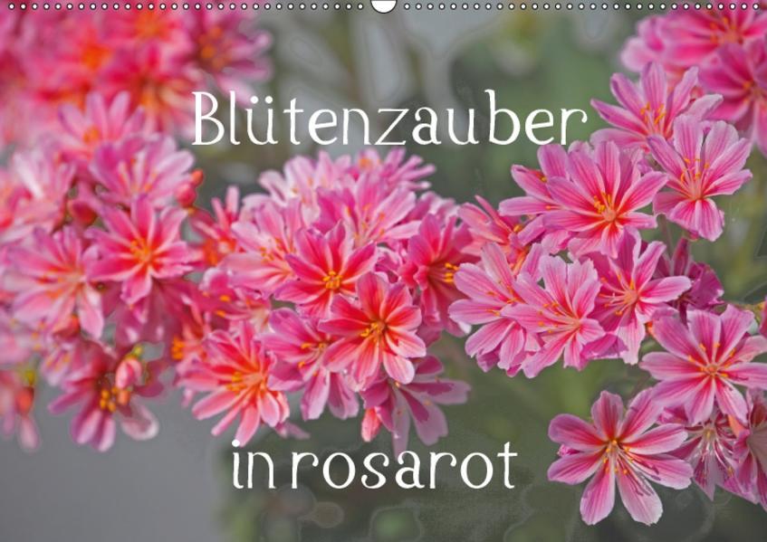 Blütenzauber in rosarot (Wandkalender 2017 DIN A2 quer) - Coverbild