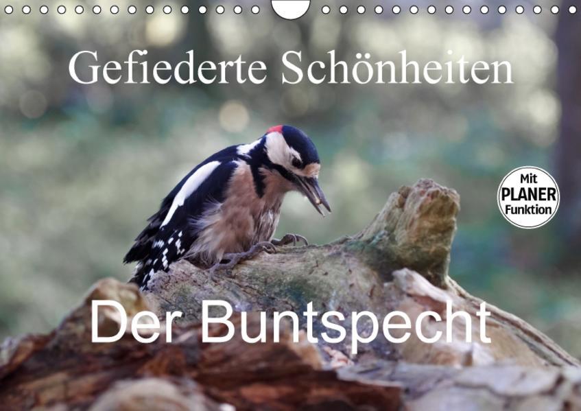 Gefiederte Schönheiten - Der Buntspecht (Wandkalender 2017 DIN A4 quer) - Coverbild