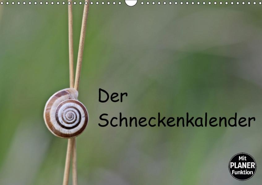 Der Schneckenkalender (Wandkalender 2017 DIN A3 quer) - Coverbild