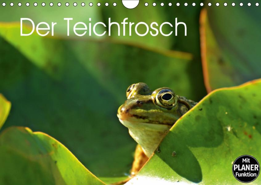 Der Teichfrosch (Wandkalender 2017 DIN A4 quer) - Coverbild