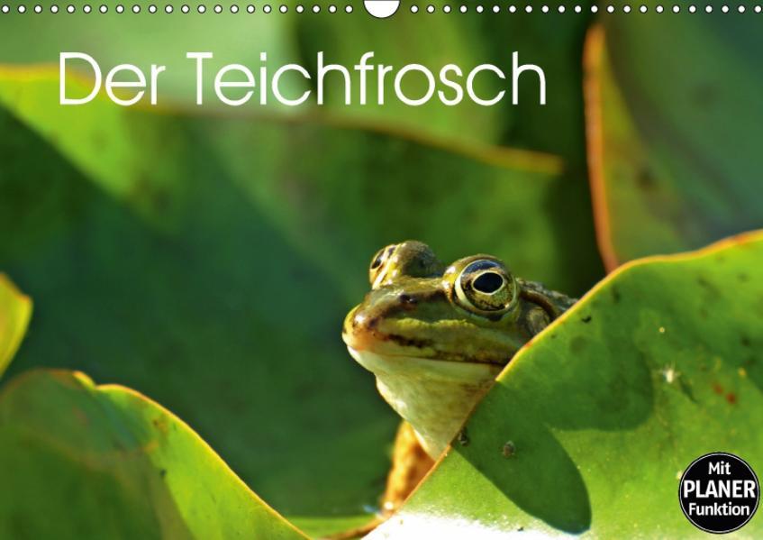Der Teichfrosch (Wandkalender 2017 DIN A3 quer) - Coverbild