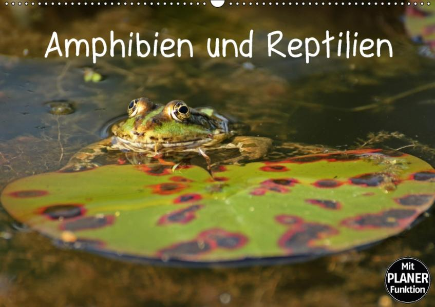 Amphibien und Reptilien (Wandkalender 2017 DIN A2 quer) - Coverbild