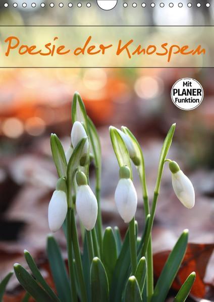 Poesie der Knospen (Wandkalender 2017 DIN A4 hoch) - Coverbild
