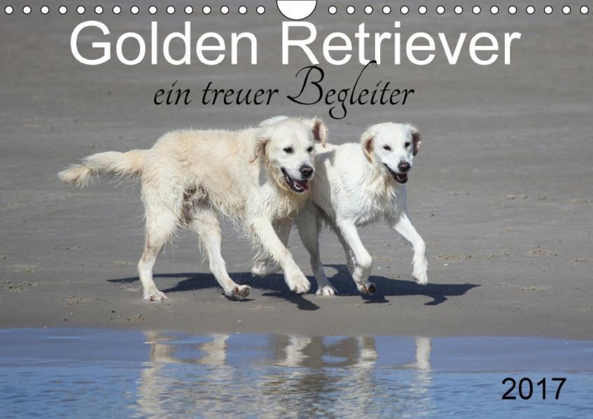 Golden Retriever ein treuer Begleiter (Wandkalender 2017 DIN A4 quer) - Coverbild