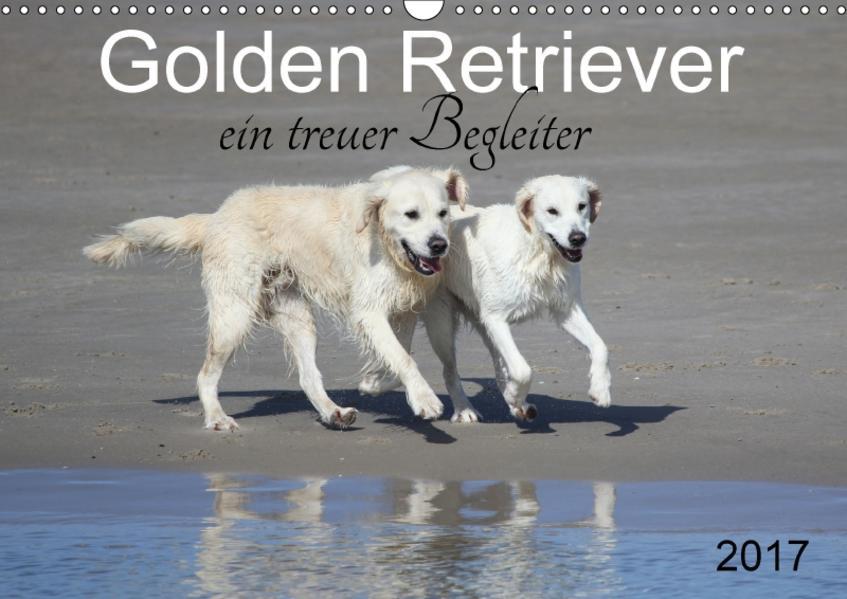 Golden Retriever ein treuer Begleiter (Wandkalender 2017 DIN A3 quer) - Coverbild