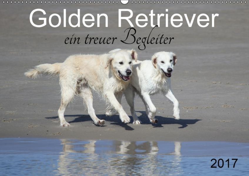 Golden Retriever ein treuer Begleiter (Wandkalender 2017 DIN A2 quer) - Coverbild