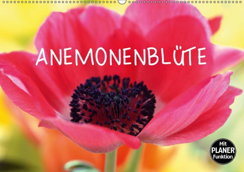 Anemonenblüte (Wandkalender 2017 DIN A2 quer) - Coverbild