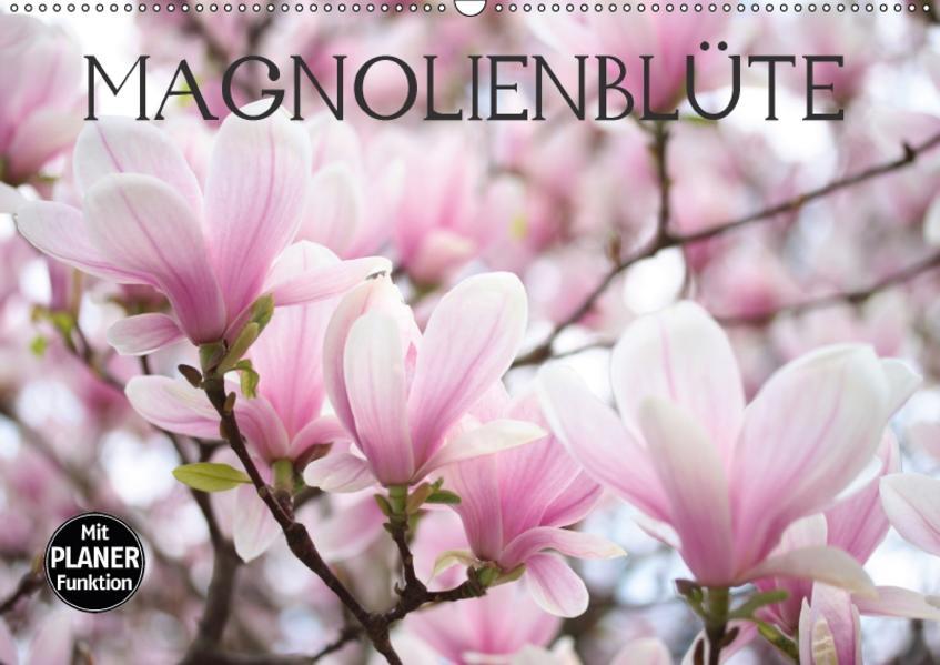 Magnolienblüte (Wandkalender 2017 DIN A2 quer) - Coverbild