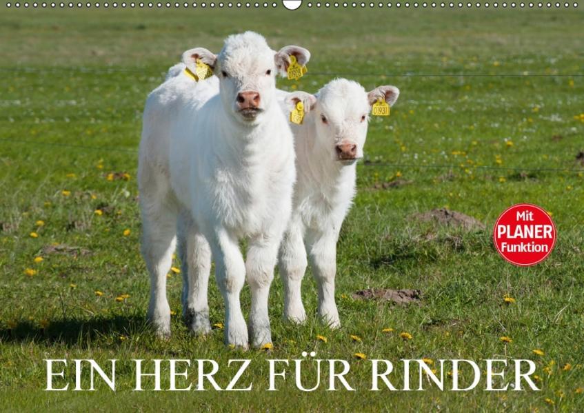 Ein Herz für Rinder (Wandkalender 2017 DIN A2 quer) - Coverbild