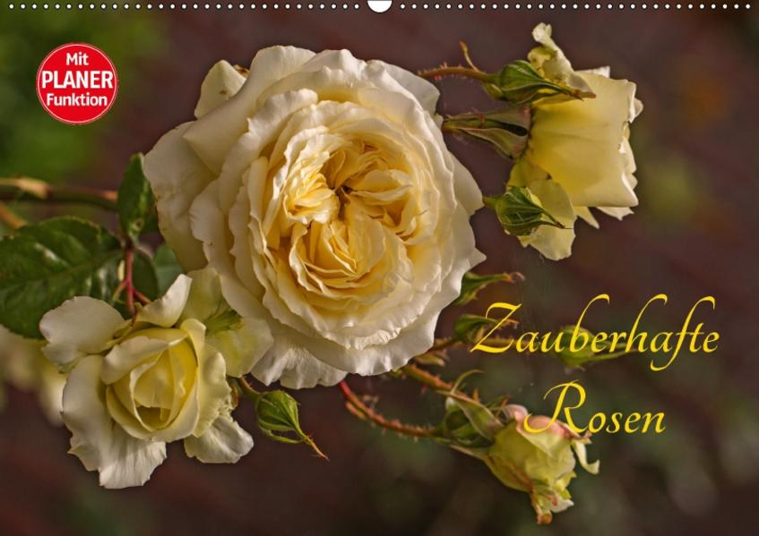 Zauberhafte Rosen (Wandkalender 2017 DIN A2 quer) - Coverbild