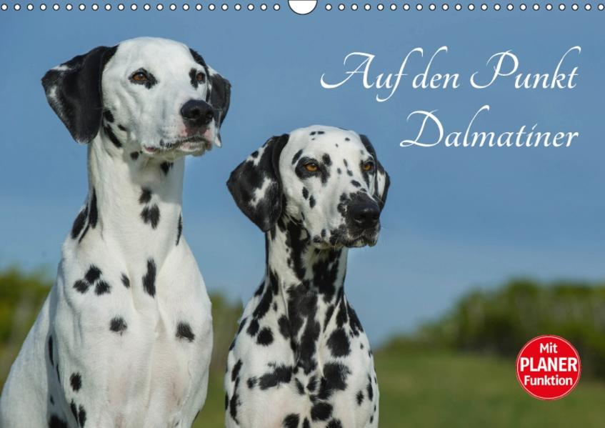 Auf den Punkt - Dalmatiner (Wandkalender 2017 DIN A3 quer) - Coverbild
