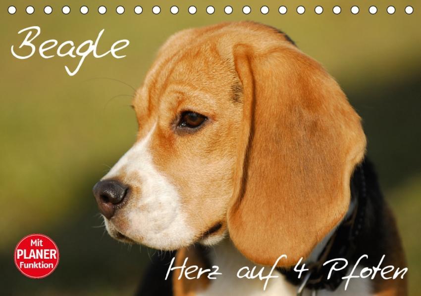 Beagle - Herz auf 4 Pfoten (Tischkalender 2017 DIN A5 quer) - Coverbild