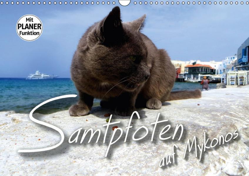 SAMTPFOTEN auf Mykonos (Wandkalender 2017 DIN A3 quer) - Coverbild