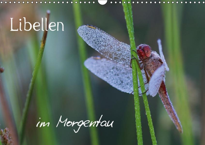 Libellen im Morgentau (Wandkalender 2017 DIN A3 quer) - Coverbild
