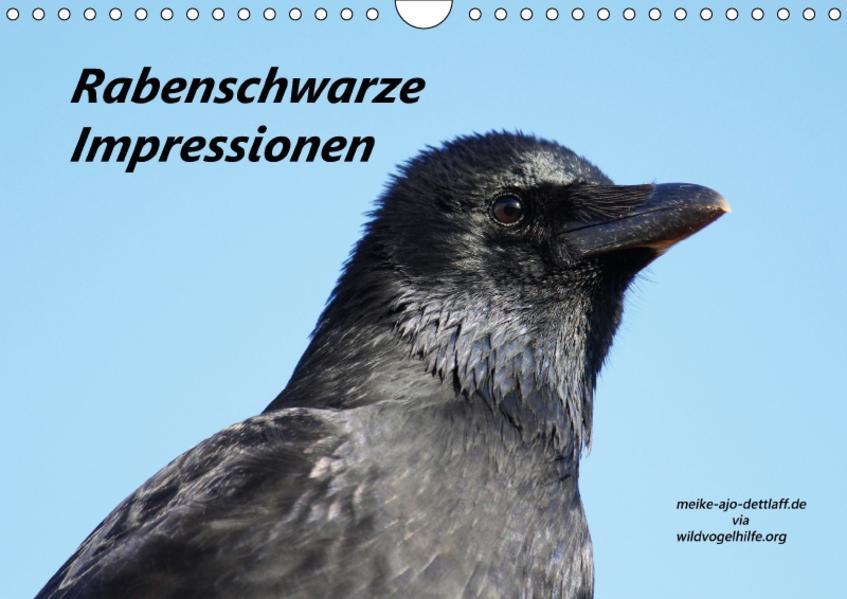 Rabenschwarze Impressionen - meike-ajo-dettlaff.de via  wildvogelhlfe.org (Wandkalender 2017 DIN A4 quer) - Coverbild