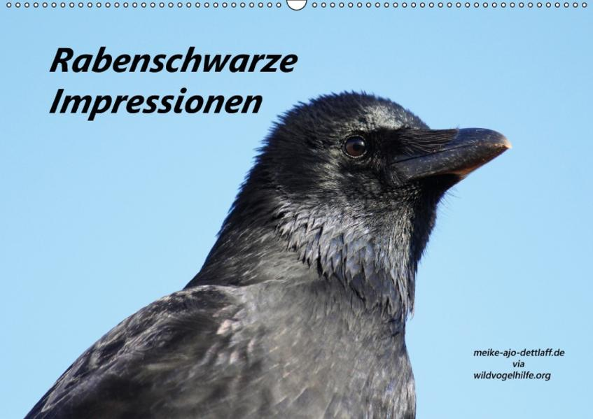 Rabenschwarze Impressionen - meike-ajo-dettlaff.de via  wildvogelhlfe.org (Wandkalender 2017 DIN A2 quer) - Coverbild