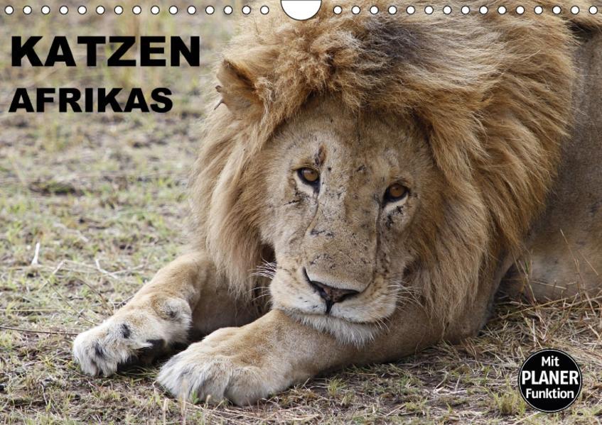 Katzen Afrikas (Wandkalender 2017 DIN A4 quer) - Coverbild