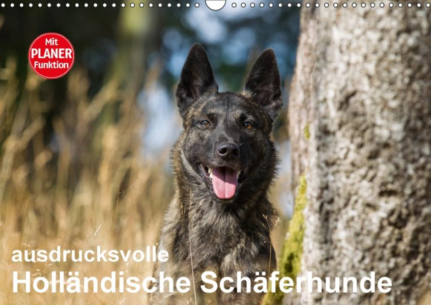 ausdrucksvolle Holländische Schäferhunde (Wandkalender 2017 DIN A3 quer) - Coverbild