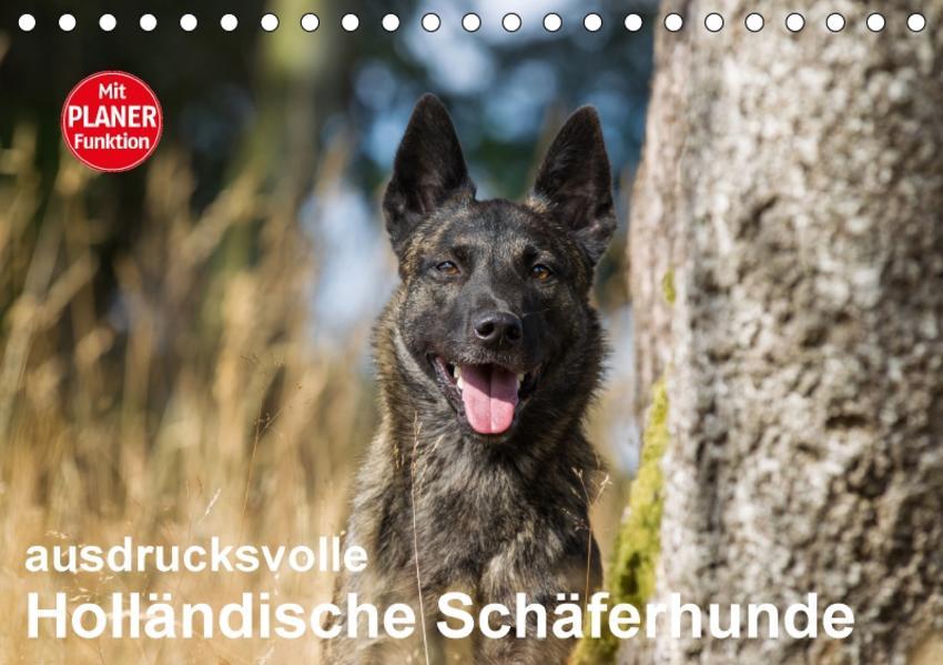 ausdrucksvolle Holländische Schäferhunde (Tischkalender 2017 DIN A5 quer) - Coverbild