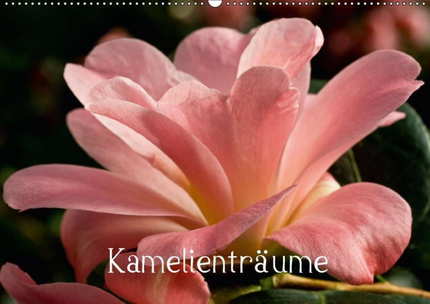Kamelienträume (Wandkalender 2017 DIN A2 quer) - Coverbild