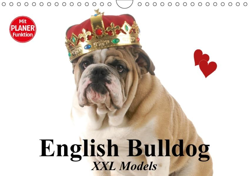 English Bulldog XXL Models (Wandkalender 2017 DIN A4 quer) - Coverbild