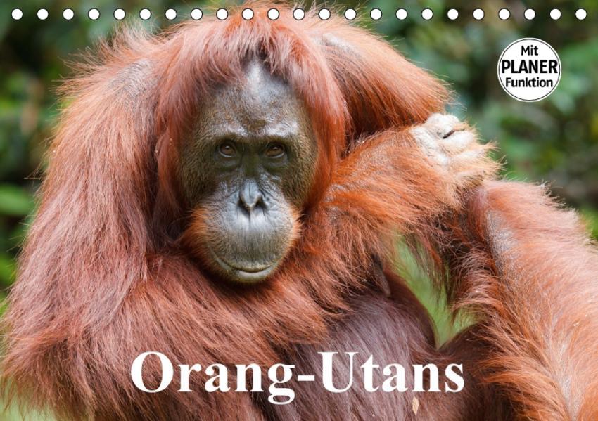 Orang-Utans (Tischkalender 2017 DIN A5 quer) - Coverbild