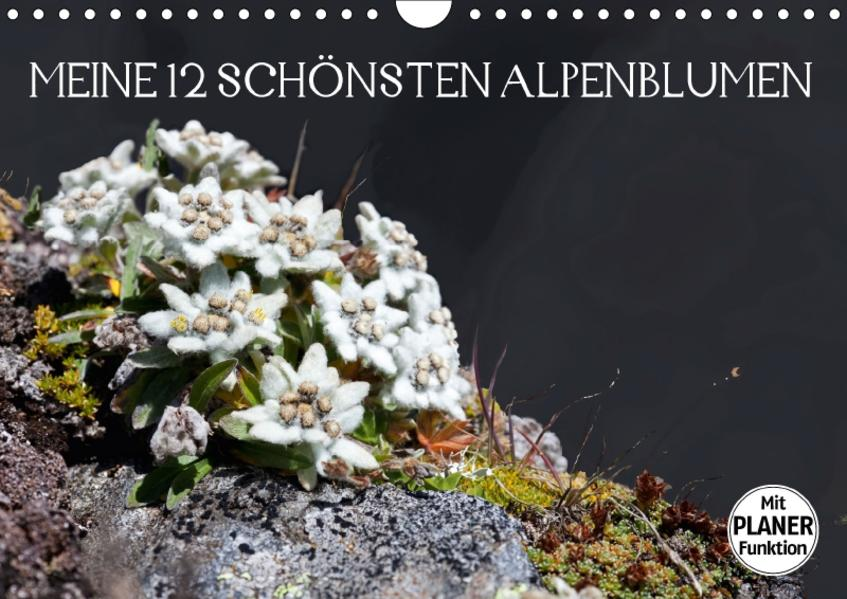 Meine 12 schönsten AlpenblumenAT-Version  (Wandkalender 2017 DIN A4 quer) - Coverbild