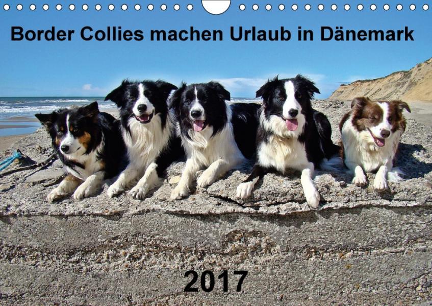 Border Collies machen Urlaub in Dänemark (Wandkalender 2017 DIN A4 quer) - Coverbild