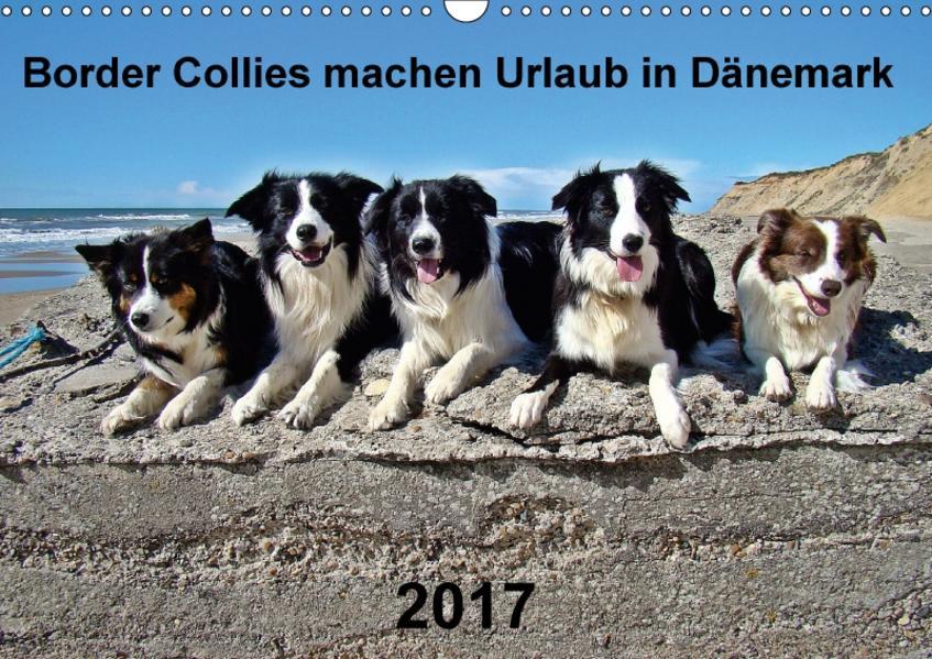 Border Collies machen Urlaub in Dänemark (Wandkalender 2017 DIN A3 quer) - Coverbild