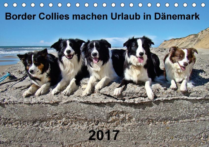 Border Collies machen Urlaub in Dänemark (Tischkalender 2017 DIN A5 quer) - Coverbild